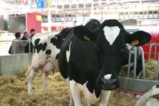Livestock Forum